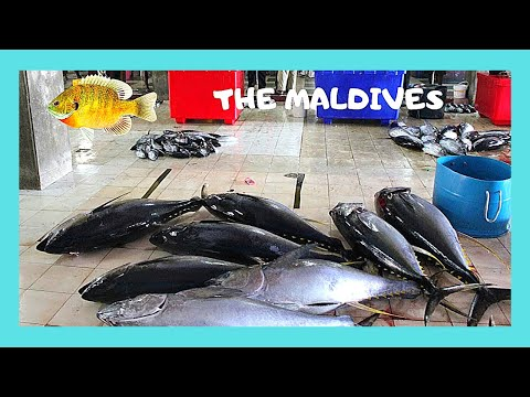 THE MALDIVES, the spectacular FISH MARKET in Malé (INDIAN OCEAN)