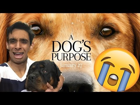 REACTING TO 'A DOGS PURPOSE' WITH MY DOG!