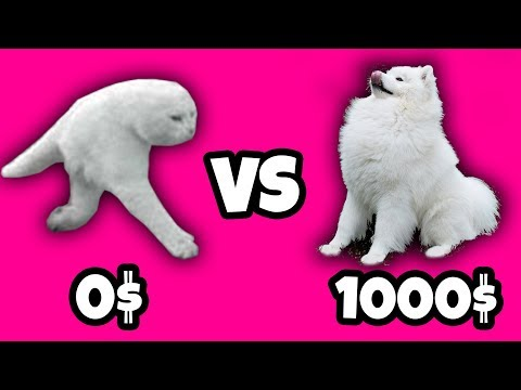 0$ Cat vs 1000$ Dog