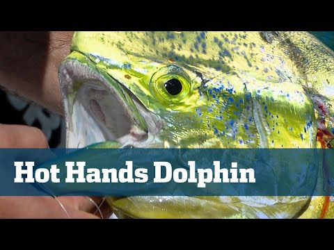 Dolphin Catching While Daytime Swordfishing - Florida Sport Fishing TV