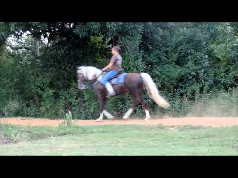 Golden Palomino Tennessee Walking Horse Stallion with true trail gait - YouTube