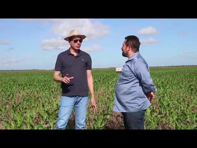 Grupo Santana mostra o desenvolvimento da plantação de milho 10/06/2019