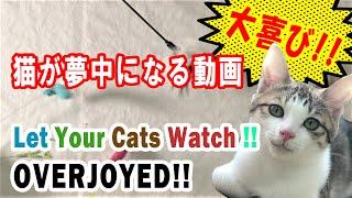 The Video Cats Get Excited 猫が夢中になる動画【猫が喜ぶ】【cats Enjoy】