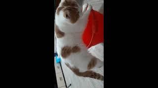 Кот Яша, который не боится воды