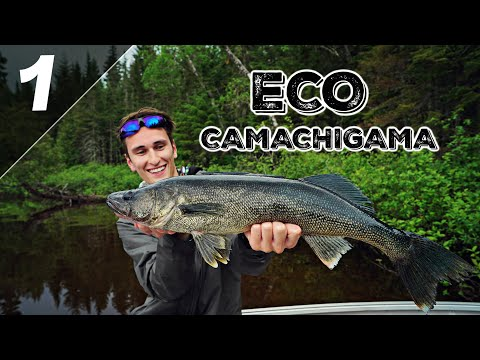 Je Pêche le Doré à la Jig! (Pourvoirie Eco Camachigama)