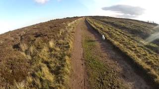 Downhill Dog Training,