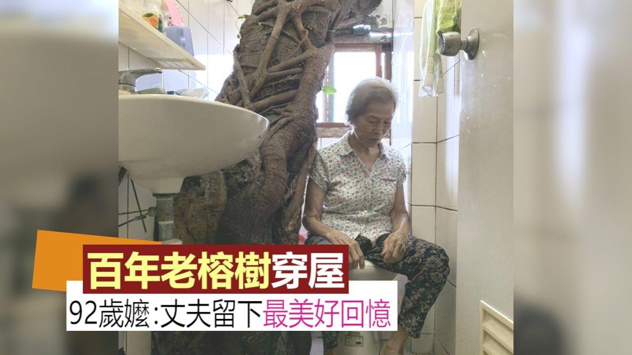 彰化奇景百年老榕樹穿屋!92歲嬤:丈夫留的最美好回憶
