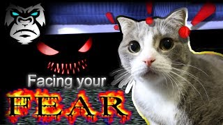 Vlog? | Facing Your Fear | My cat is afraid of my bed | Real Life?