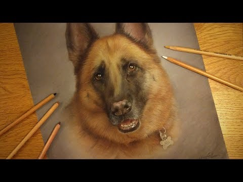 Download How To Draw A Dog Head Fast Timelapse German Shephard Easy