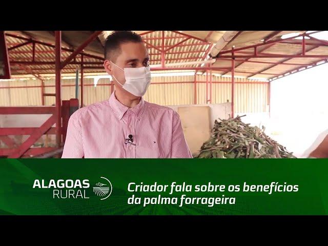 Criador fala sobre os benefícios da palma forrageira em rebanhos leiteiros
