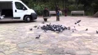 Captura de palomas en la Via Publica