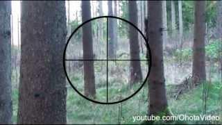 Охота на кабана с прицелом видео онлайн 2012-2013 Wild boar hunting Russia.