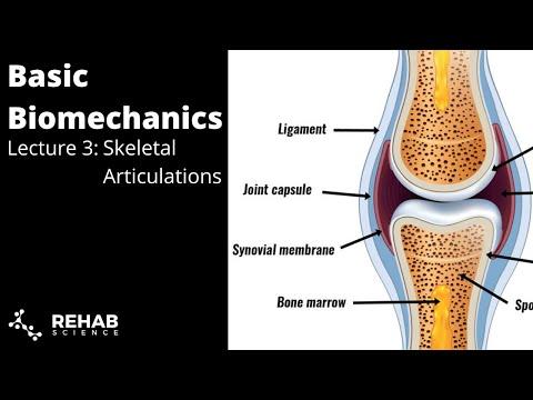 Biomechanics Lecture 3: