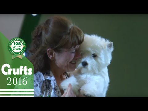 Best In Show - Behind The Scenes | Crufts 2016