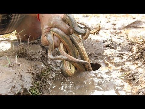 Thumbnail: Smart Boy Catch Rainbow Water Snake by Deep hole trap with Bottle
