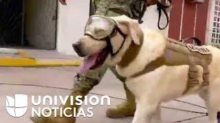 Video Frida, el perro rescatista que inspira a México tras el terremoto download MP3, 3GP, MP4, WEBM, AVI, FLV November 2017
