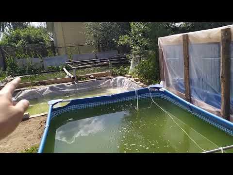 Разведение дафнии магны в бассейне! Самый дешёвый корм для рыб!