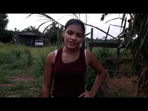 Tigresa tem sua propriedade ruralroubada na cidade de Alta Floresta na comunidade Água Limpa
