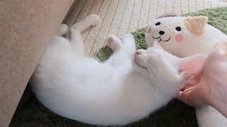 【子猫ルイと猫枕】ベッドは見送り、猫枕を側に置いてみました。