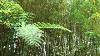Mensagem de reflexão - Ilustrações para Sermões e Palestras - A Samambaia e o bambu