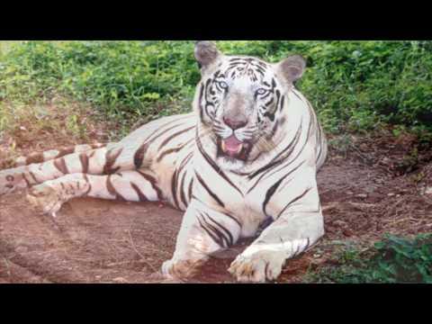 Chandipur Travel Guide & Tours   BreathtakingIndia.com