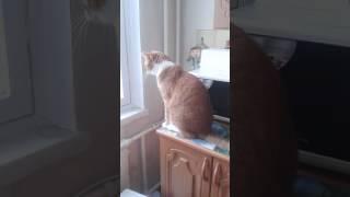 Кот смотрит в окно на птиц и повторяет за ними