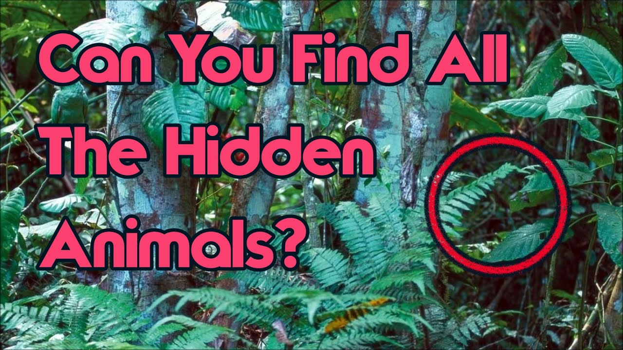 Can You Find All The Hidden Animals Impossible Challenge