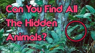 Can You Find All The Hidden Animals? Impossible Challenge!