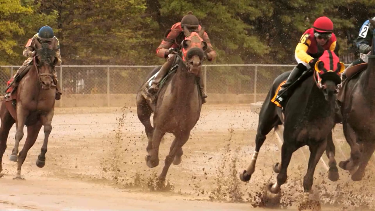 Horse racing in slow motion - running horses - YouTube