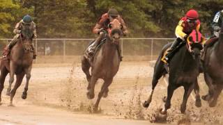 Horse racing in slow motion - running horses