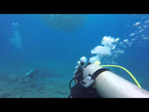 Laulau Beach  Dive Highlights