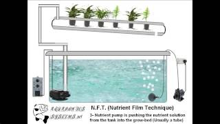 Hydroponics N.F.T (Nutrient Film Technique) system