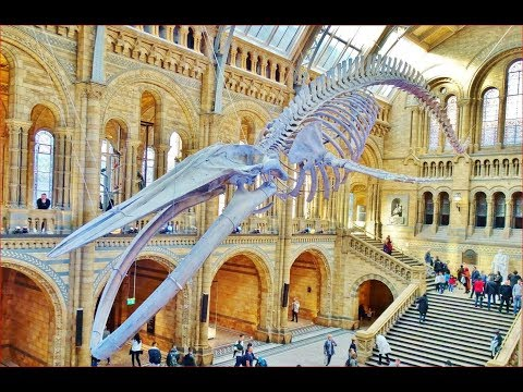 World Most Impressive Natural History Museum, London