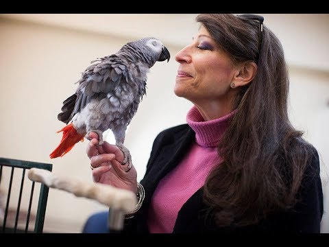 Animal Matters Seminar: Numerical Competence in African Grey