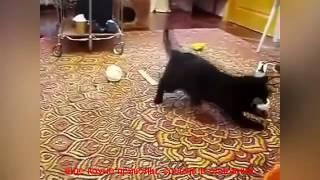 смешные приколы про животных видео бесплатно