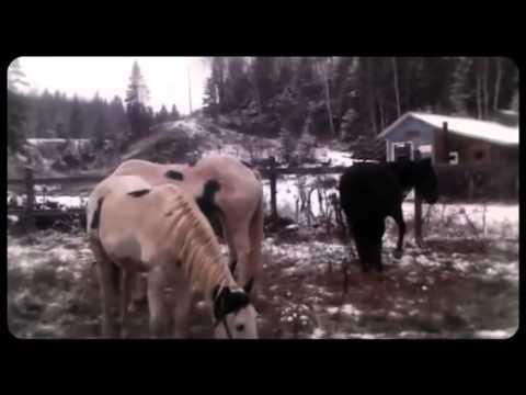 vivre dans les bois avec les chevaux youtube. Black Bedroom Furniture Sets. Home Design Ideas