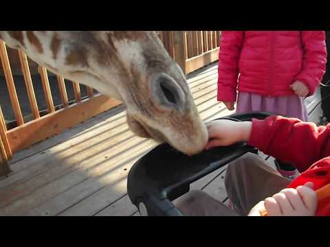 """Ethan feeding April from the stroller at Animal Adventure Park """"Jungle Bells"""" event 2017"""