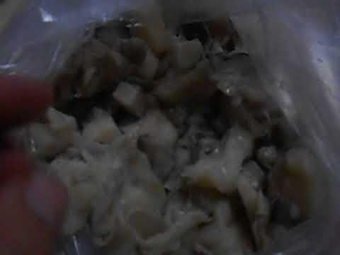 грибы оленья борода