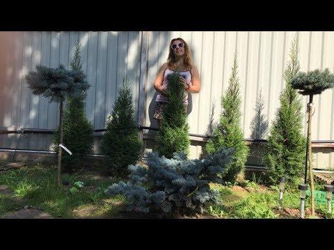 Моя любимая дача 7.09.19г. Обзор сада. Мое скромное жильё на даче. Урожай. Хвойные. ❤️