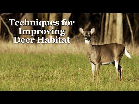 Techniques for Improving Deer Habitat
