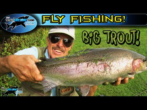 GIANT TROUT on a 4wt fly rod from streams | TAFishing
