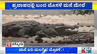 Crocodile Spotted On Top Of A House In Belagavi