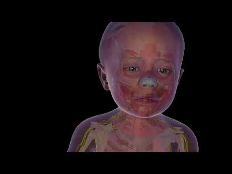 Soul Machines reveal the secrets behind Baby X, their life like artificial baby