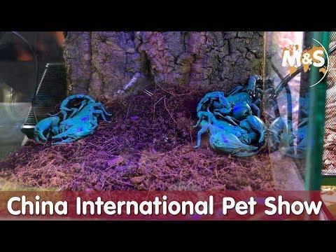 In China schimmern die Scorpione blau | China International Pet Show | CIPS 2018