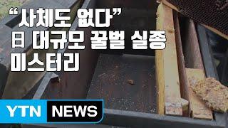 """""""사체도 없다"""" 日 대규모 꿀벌 실종 미스터리 / YTN"""