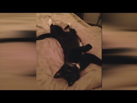 Albuquerque family finds their cat's body cut in half behind home