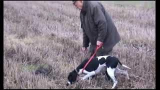 Układanie psów myśliwskich - Józef Prętki