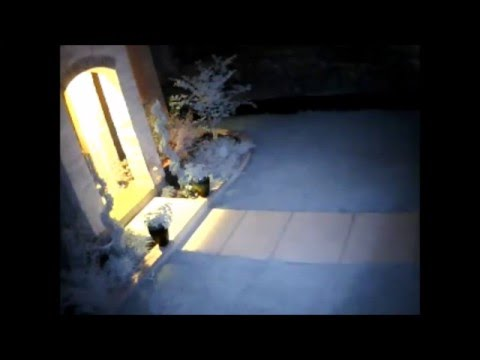 Ghost or Bug? Home Security Camera Captures Weird Flying Thing