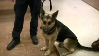 Janesville Canine Unit