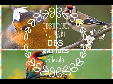 Oiseaux au Parc des Rapides à ville Lasalle